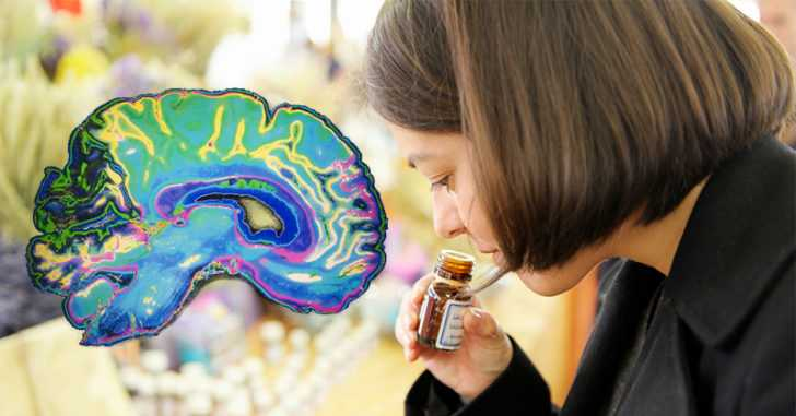 The Best Essential Oils for Anxiety: How They Affect the Brain