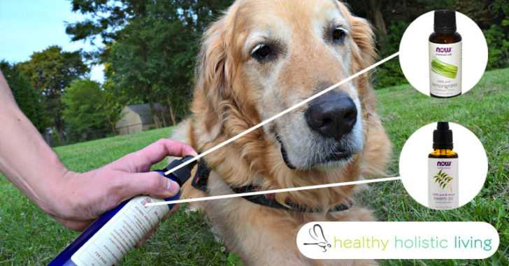 How to Effectively Prevent, Remove and Kill Fleas and Ticks Without Any Chemicals