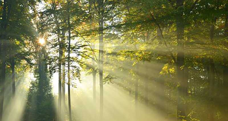 forest-trees-nature-16
