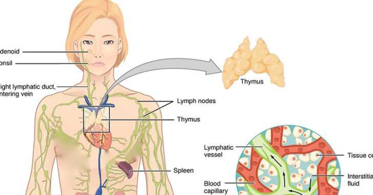 The Lymphatic System Is One of the Ways Cancer Spreads: 4 Ways to Keep It Healthy