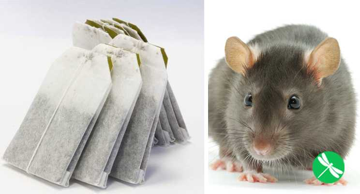 Use The Tea Bag Method To Keep Rats and Spiders Out of Your Home